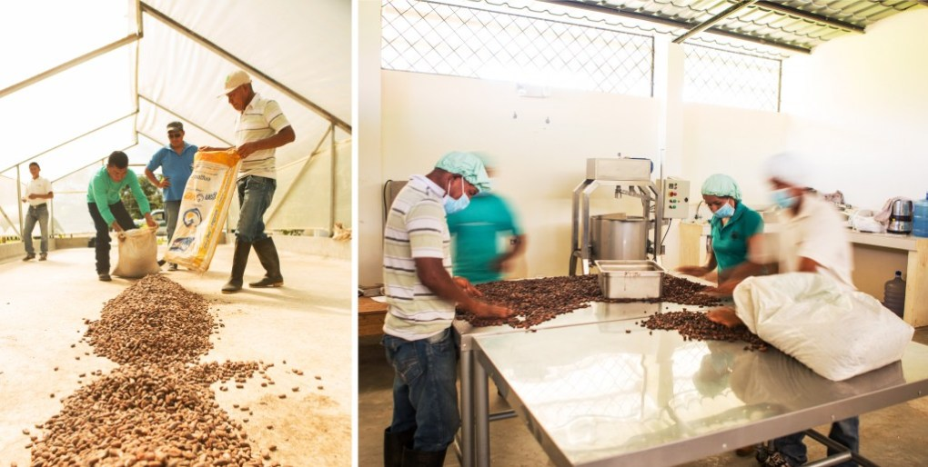 Workers sort fermented and dried cacao ahead of chocolate production at Asociacion Tsatsayaku