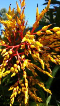 A colourful Bromelia in the gardens of the Xandari Resort and Spa, Costa Rica