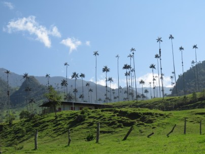 Hiking in the Cocora Valley in the coffee region in Colombia