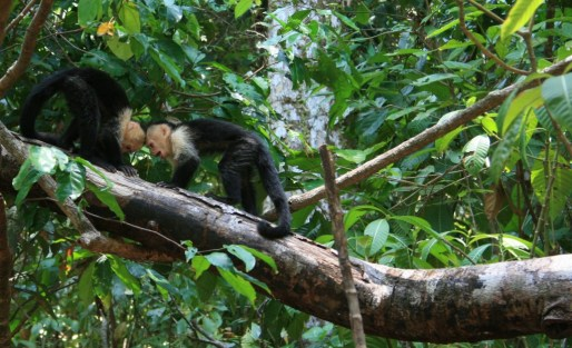 Wildlife in Manuel Antonio National Park