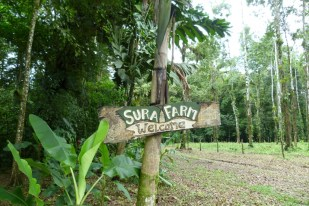 Arriving in Finca Sura, an organic farm that also offers accommodation in Costa Rica