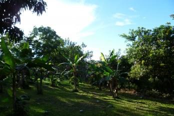 During a walking tour in Juanilama rural community, Costa Rica