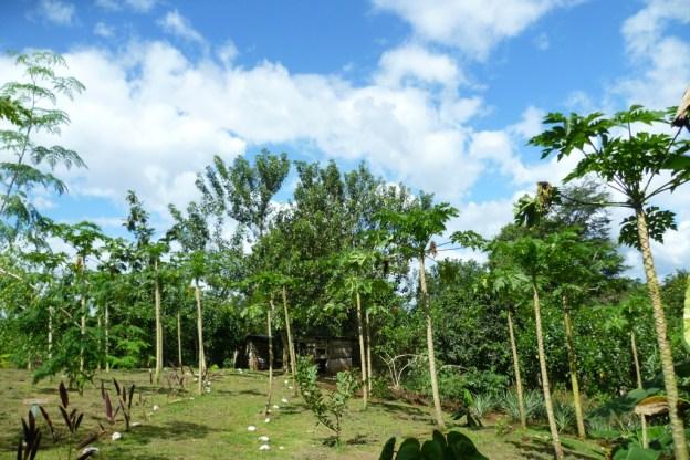 During an organic farm tour in Juanilama rural community, Costa Rica