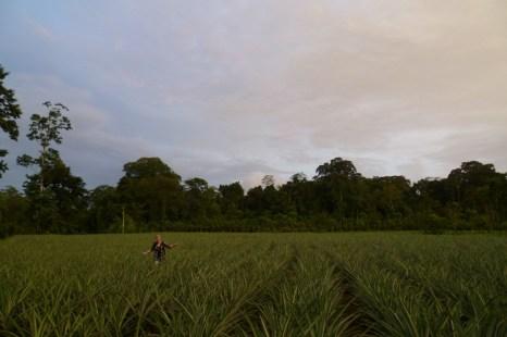 Hannah walking through organic pineapple fields in Finca Sura, Costa Rica
