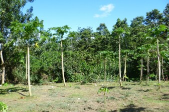 Rather than deforesting, the Juanilama rural community uses agro forestry and organic farming in Costa Rica