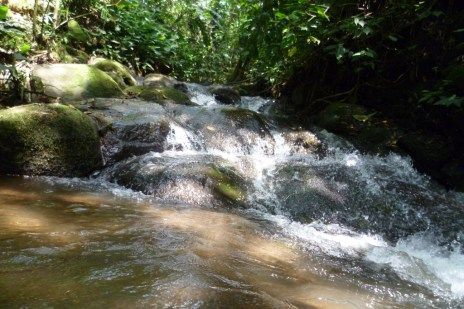 Clear water rivers crossing the organic coffee plantation in Costa Rica