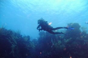 Unique and amazing experience: Scuba diving in Belize