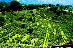 Rural tourism in Boquete fields in Panama