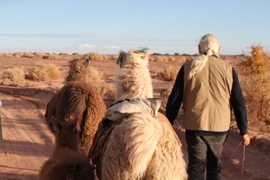 The ancestral caravan, walking with llamas and with Lickan Antay guides through the Atacama Desert, to better undersatnd it