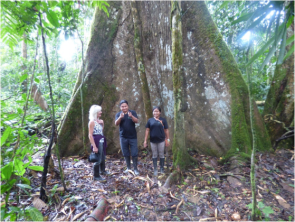 Our local guides Flora and Danny explaining about this Kapok Tree, during a trekking excursion in the Amazon rainforest