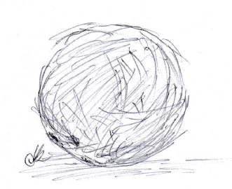 11-7-coconuts
