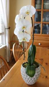 white, orchid, table, living room, decor