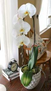orchid, flowers, floral, living room, table