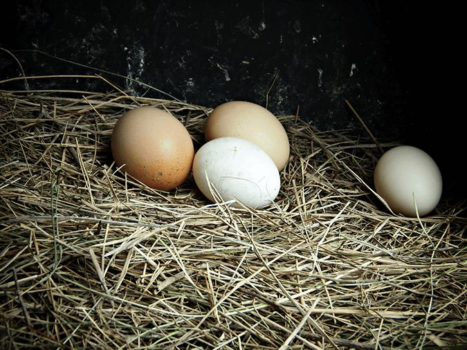 chicken-eggs-nest