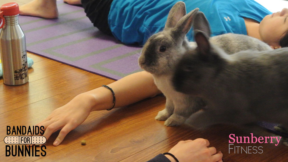 Jan 2016 Bunny Yoga