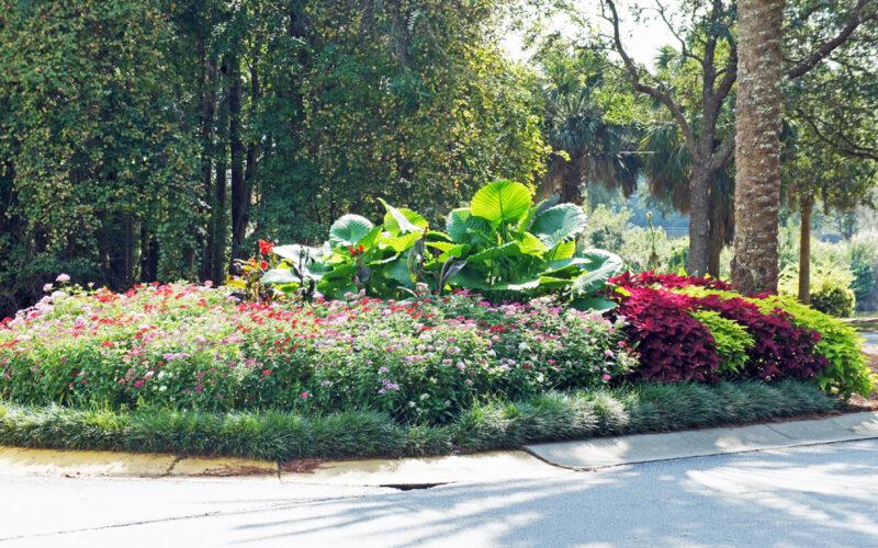 Sun City Blvd Flowers