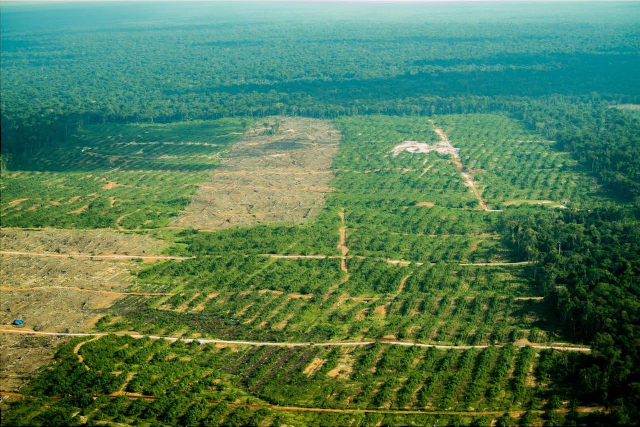 Kakaoplantasjen i Tamshiyacu, midt i Amazonas, 2018.