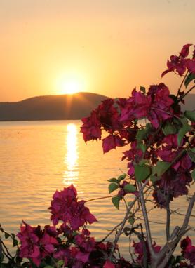 Lake flower sunset