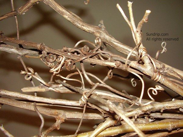 Curly twigs