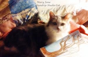 Mary Jane - Sundrip Studio Cat