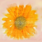 Sunflower Logo Sundrip