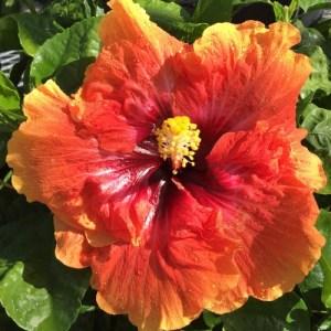 T. Orange Garnet (2)