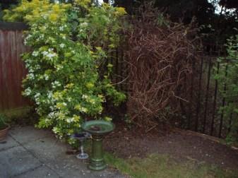 Reclaiming the Garden