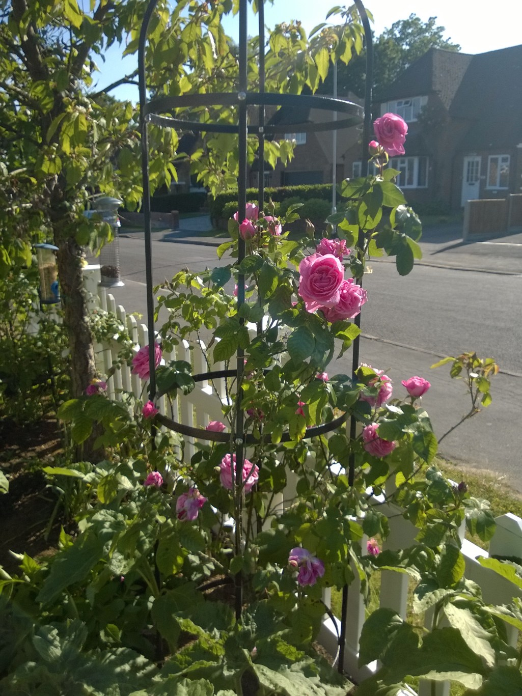 Gertrude Jekyll Climbing a Rose Tower
