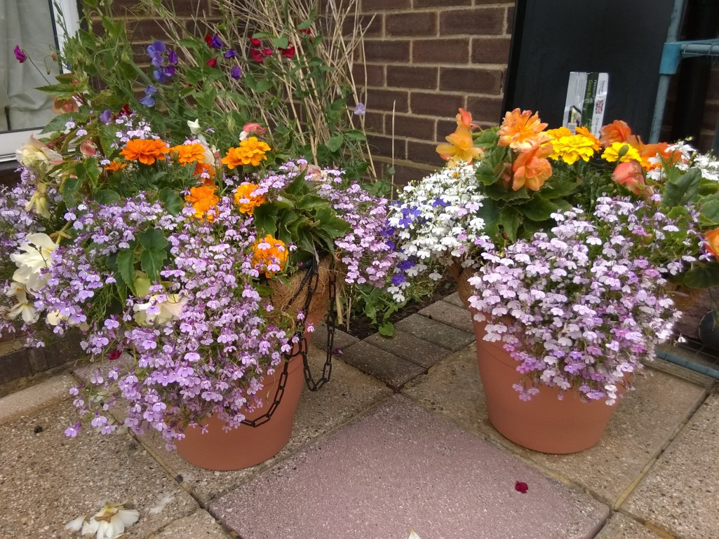 Non-hanging hanging baskets
