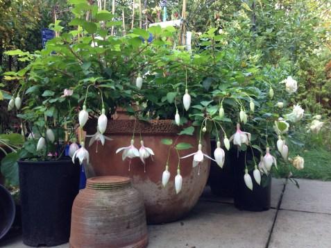 Summer Terracotta Pot