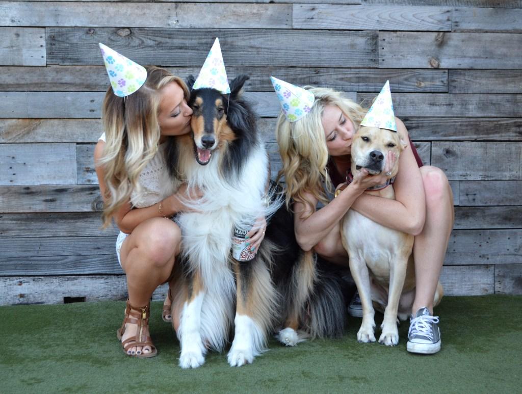 Happy Birthday Harley, Dog Bar Puppy Party! http://www.sunkissedindecember.com/2017/02/16/puppy-party/