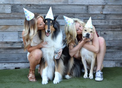 Happy Birthday Harley, Dog Bar Puppy Party! http://www.sunkissedindecember.com/2017/02/16/puppy-party/