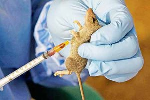 Image result for Lassa fever: Experts urge govt to standardise Infectious control practices