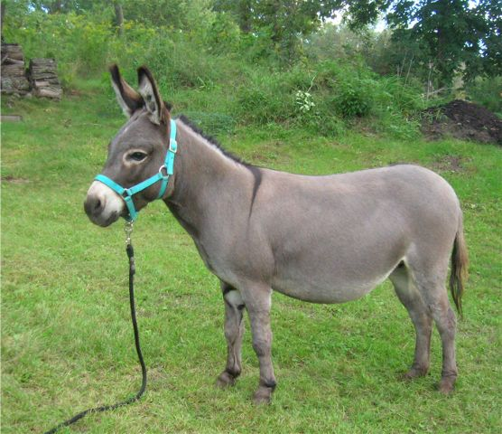Image result for jenny mule