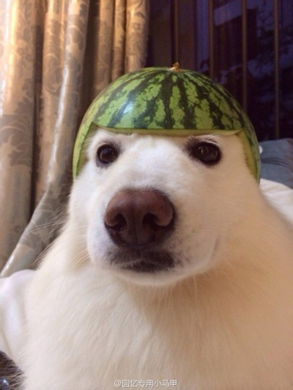 cat and dog fruit helmets