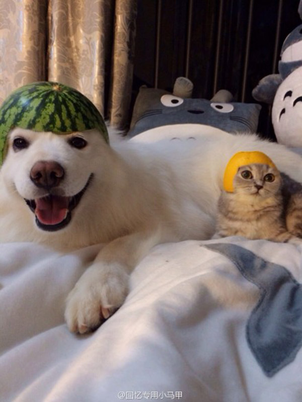 cat and dog fruit helmets