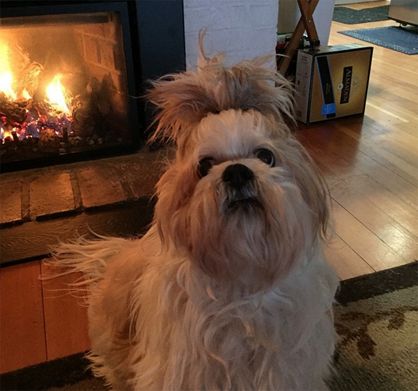 Move On Over Man Buns DOG Buns Are The New Craze