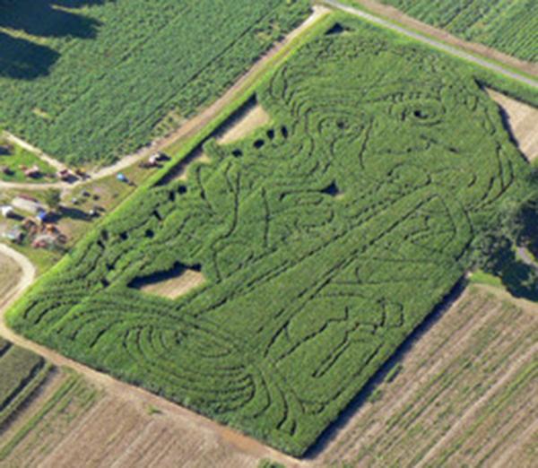 laberintos de maíz sorprendentes