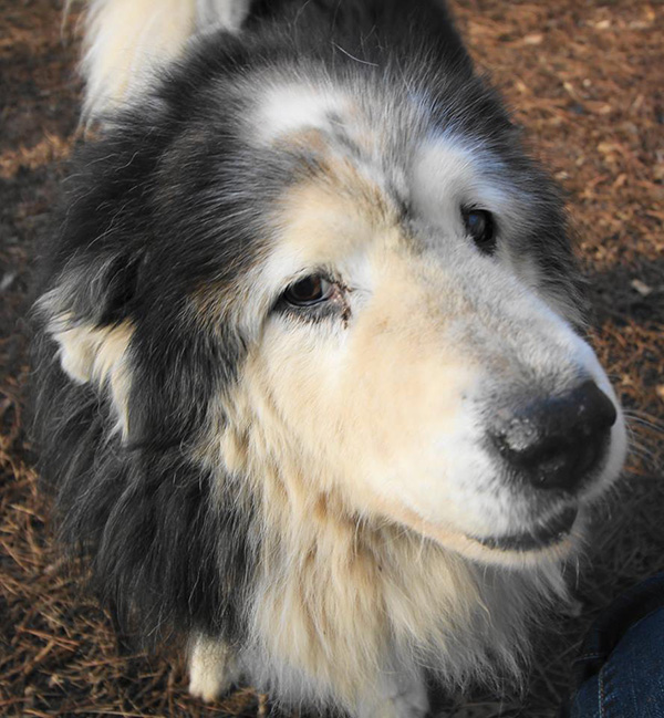 senior dog rescue