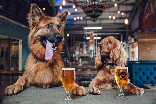 beer company gives employees off a week for a puppy