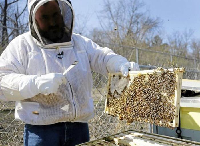 community raises money for bees