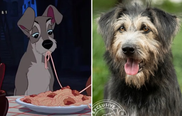 monte lady and tramp