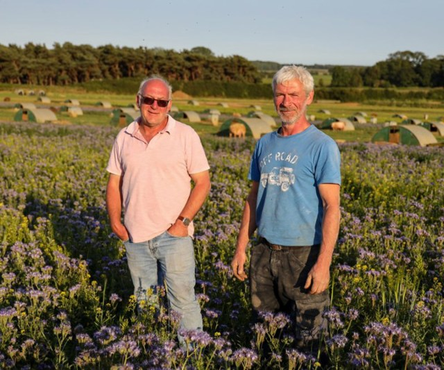 pig farmers feed million bees
