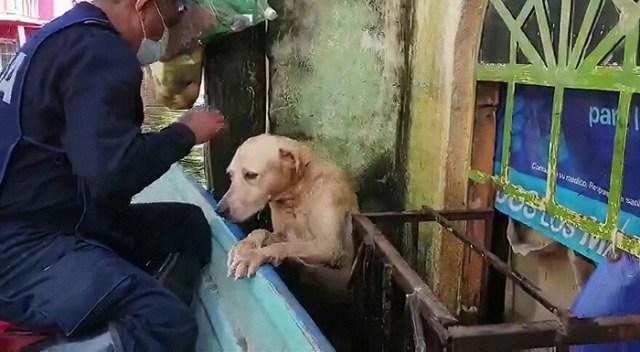dog rescued Mexico floods now marina