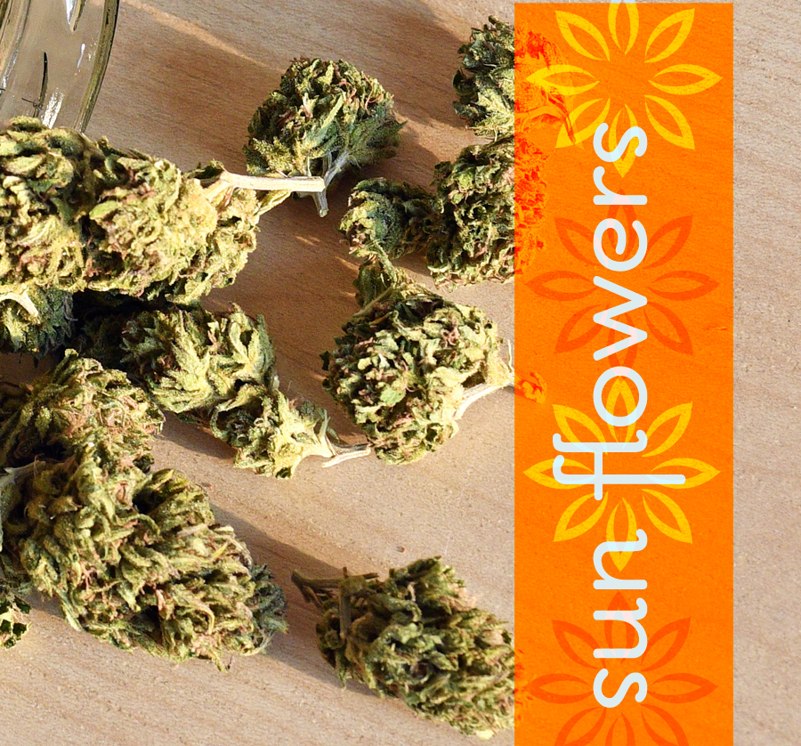 Sun Provisions Southwest Michigan Marijuana DispensaryMarijuana Buds Flowers Cannabis