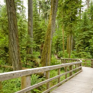 cathedral-grove-walkway