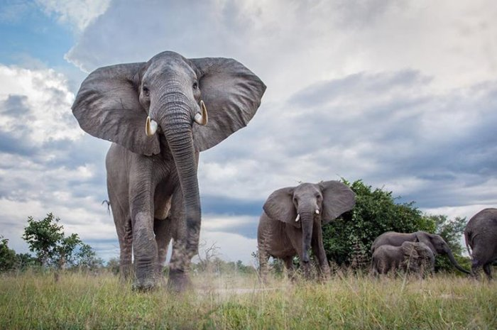 Week on the Wildside – A Safari in South Luangwa