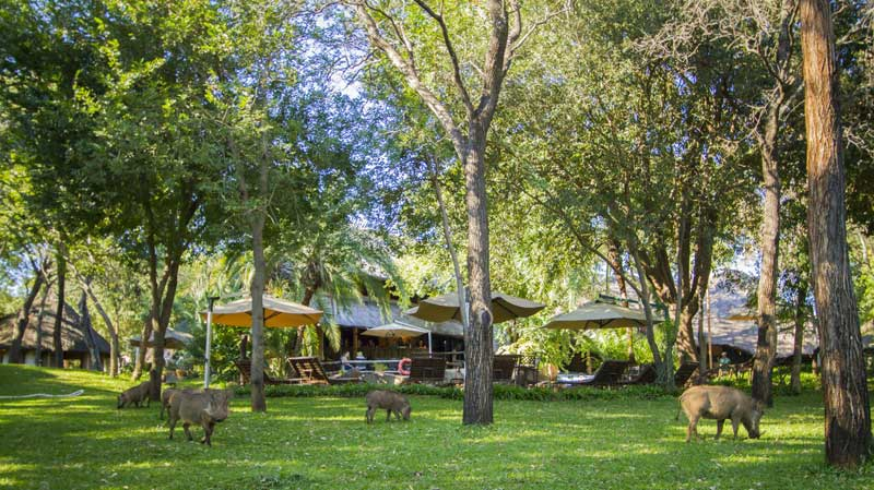 Kruger Safari Lodge, Animals You'll Most Likely Spot on the Grounds of Your Kruger Safari Lodge