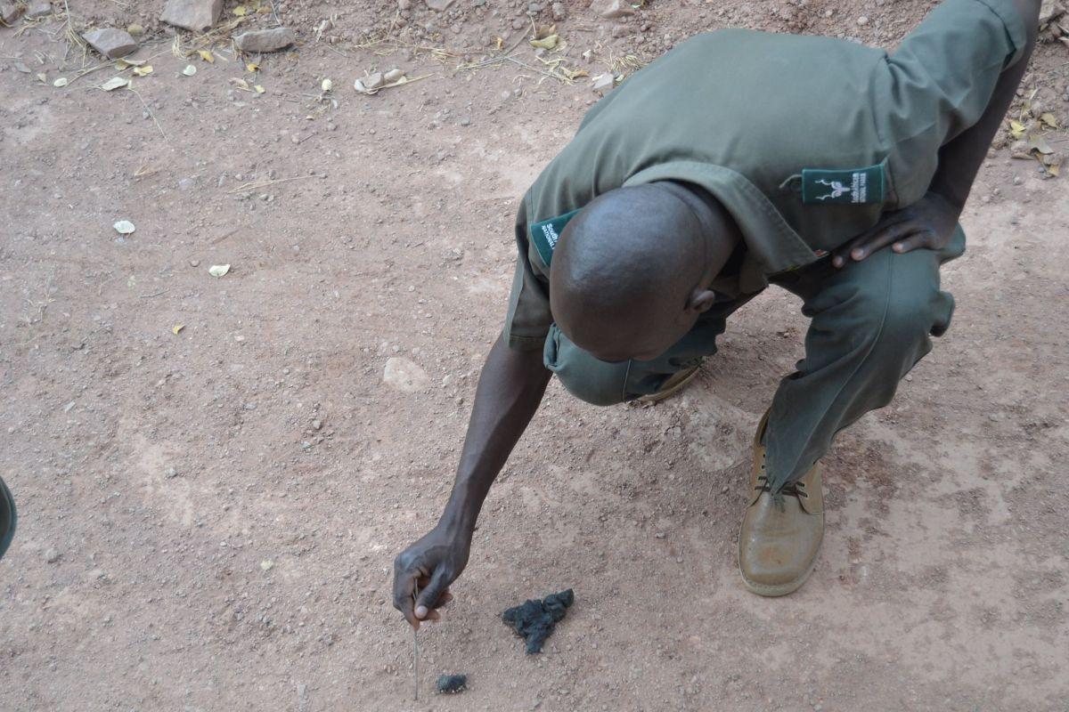 Trails, Three different Kruger Park Walking Trails to suit adventurous safari goers