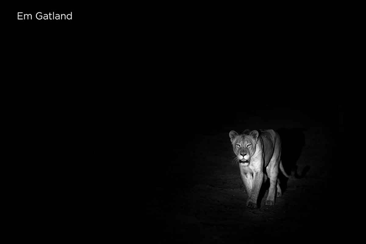 Lions in the Darkness
